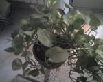 dai rimedi della nonna,naturali: piante mangia inquinamento,rimedi,nonna,piante,mangia inquinamento,casa,naturali