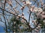 Immagine primavera.JPG